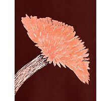 Flower of Orange Photographic Print