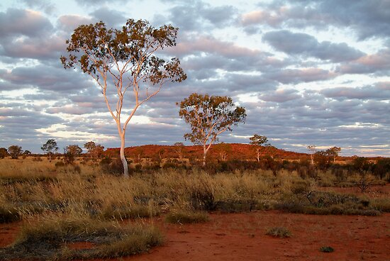 Sunset Ghost Gums,Batton Hill, North Simpson Desert by Joe Mortelliti