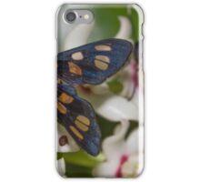 Hoya australis with native Tiger Moths iPhone Case/Skin
