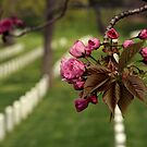 Arlington National Cemetery by Tokay