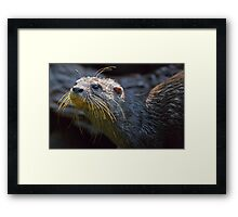 Asian Small-Clawed Otter Framed Print