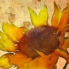 Helianthus by John Edwards
