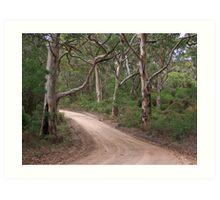 Boranup Forest Drive Art Print