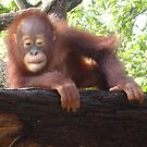 Orang Utan by Futurama