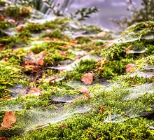 Inverness Morning Webs, Scotland. by elspiko