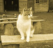 Oscar The Plantation Cat by Walter Collazo
