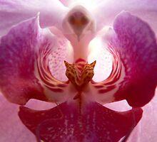 Orchid by Gisele Bedard