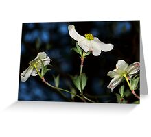 Beautiful Delight Greeting Card