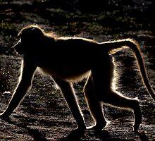 Monkey by Sandyou