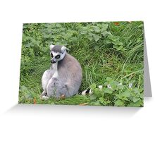 Has Anyone Seen My Tail? (I'm sure it was here a moment ago...) Greeting Card