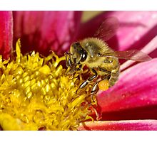 Collecting Nectar. Photographic Print
