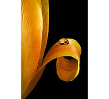 Curled Photographic Print