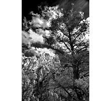 La Madre Treescape Photographic Print