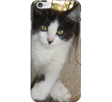 Cute Playful Kitten iPhone Case/Skin