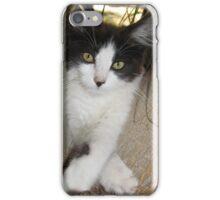 Cute Playful Kitten iPhone Case/Skin
