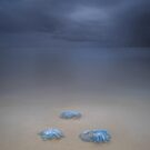 Jelly Fish Bay - Cleveland Qld Australia by Beth  Wode