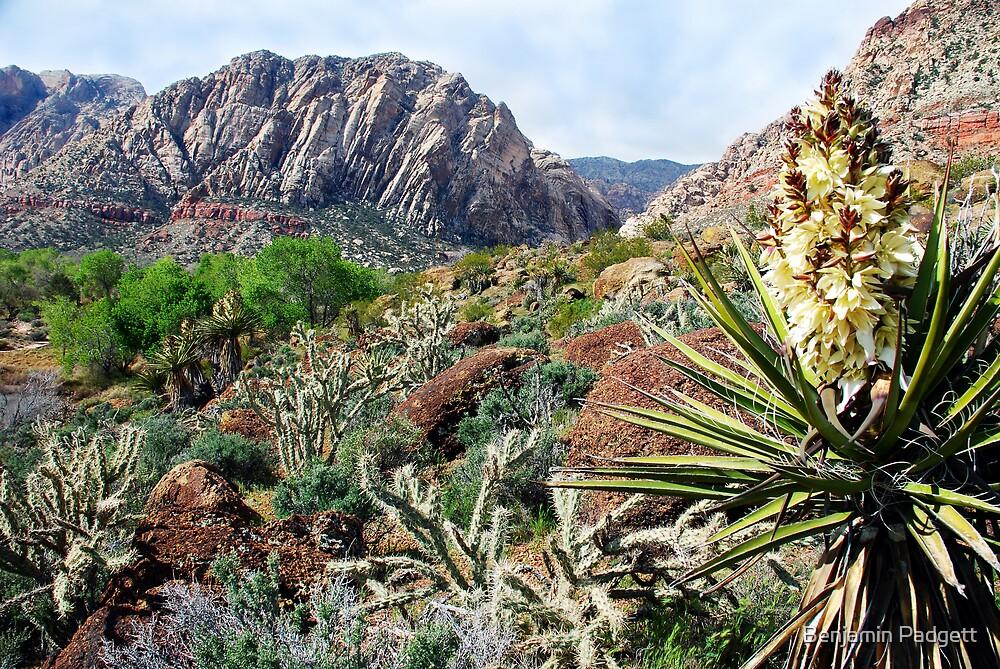 Red Rock Desertscape by Benjamin Padgett