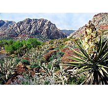 Red Rock Desertscape Photographic Print