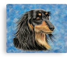 Marcus - Long Haired Black and Tan Dachshund  Canvas Print