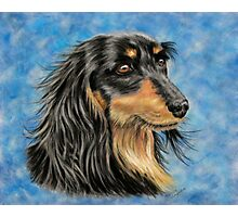 Marcus - Long Haired Black and Tan Dachshund  Photographic Print