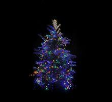 The Stainglass Tree by RoyceRocks