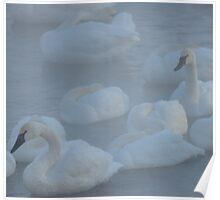 Swans In Morning Fog Poster