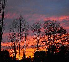 Late Autumn Sunset by RoyceRocks