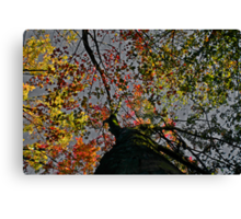 """Looking Up"" Canvas Print"