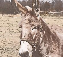 Mammoth Jack Donkey - Five Hills Bocephus by Smoothmule