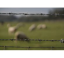 grazing Photographic Print