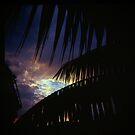 Holga madness...... my little palm tree by Juilee  Pryor