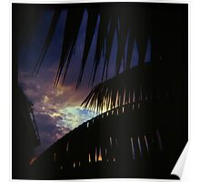 Holga madness...... my little palm tree Poster