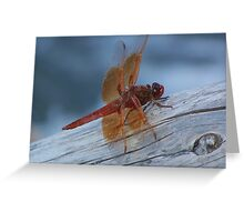 Fly Dragon, Fly ! Greeting Card