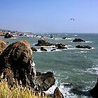 Rock Point by Jo Nijenhuis