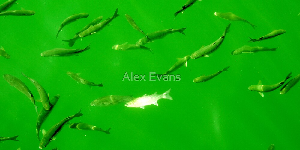 Green Fish by Alex Evans