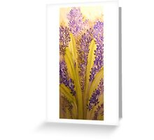 hyacinth 'for the love of flowers' © 2007 patricia vannucci  Greeting Card