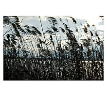 Blowin'in the wind Photographic Print