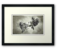 Eagles Fighting - www.jbjon.com Framed Print