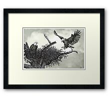 Eagles Nest - www.jbjon.com Framed Print