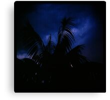 Holga madness......little palm and stormy sky Canvas Print