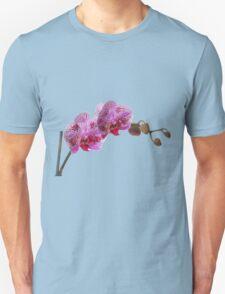 Purple Phaleanopsis Orchid on white background T-Shirt