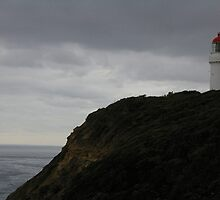 Cape Shank Lighthouse  by Lesley  Hill