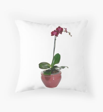 Purple Phaleanopsis Orchid on white background Throw Pillow