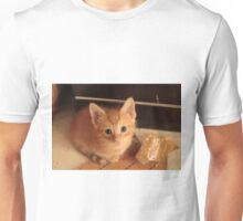 Ginger kitten Unisex T-Shirt
