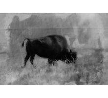Bison On the Range Photographic Print