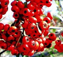 Berries 2 by DRCP