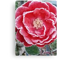 Red Rose - Icy Pedals Canvas Print
