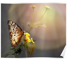 Butterfly Glow Poster