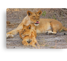 Lioness with Cub Canvas Print