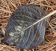 Fallen leaf on pine needles by John Wright